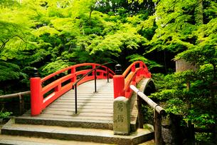 5月 新緑の北野天満宮のもみじ苑の写真素材 [FYI01780373]