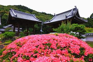 5月 新緑の興聖(こうしょう)寺  宇治の禅寺の写真素材 [FYI01780377]