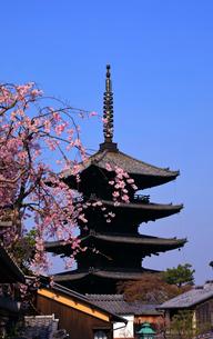 3月 枝垂桜の八坂の塔-京都東山の風景-の写真素材 [FYI01780380]