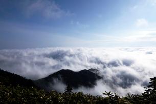 6月 津別峠から見た雲海の写真素材 [FYI01780412]