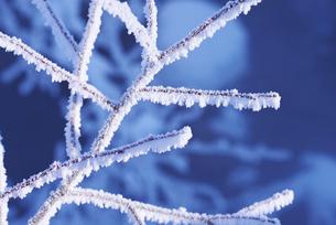 樹氷の木の写真素材 [FYI01780416]