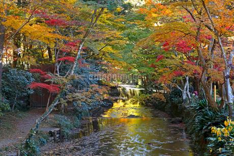11月 紅葉の小国神社 秋彩の写真素材 [FYI01780462]