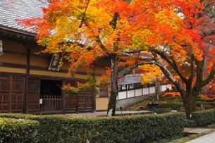 11月秋 紅葉の永源寺 滋賀の秋景色の写真素材 [FYI01780483]
