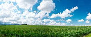 トウモロコシ畑と丘の写真素材 [FYI01780501]