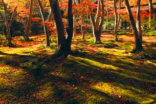 11月  紅葉の祇王寺-京都嵯峨野-の写真素材 [FYI01780511]