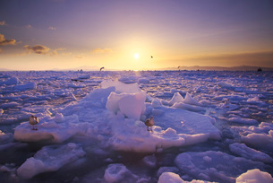 日の出と流氷と国後島の写真素材 [FYI01780536]