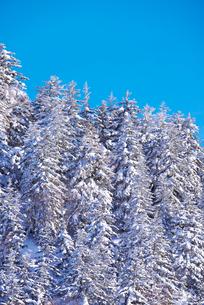 冬の木々の写真素材 [FYI01780593]