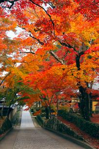 11月秋 紅葉の永源寺 滋賀の秋景色の写真素材 [FYI01780637]