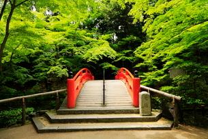 5月 新緑の北野天満宮のもみじ苑の写真素材 [FYI01780720]