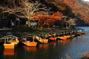 11月秋 紅葉の嵐山の朝の写真素材 [FYI01780727]