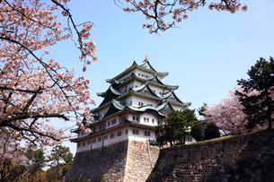 3月 桜の名古屋城の写真素材 [FYI01780740]