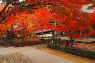 11月秋 紅葉の永源寺 滋賀の秋景色の写真素材 [FYI01780743]