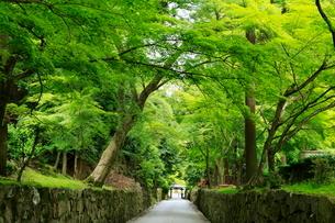 5月 新緑の興聖(こうしょう)寺 -宇治の禅寺-の写真素材 [FYI01780756]