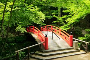 5月 新緑の北野天満宮のもみじ苑の写真素材 [FYI01780774]