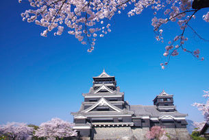 熊本城とサクラの写真素材 [FYI01780797]