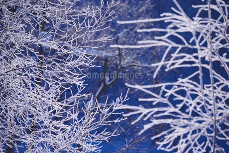 旭岳温泉の樹氷の写真素材 [FYI01780807]