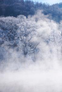 鳥沼公園のけあらしと樹氷の写真素材 [FYI01780822]