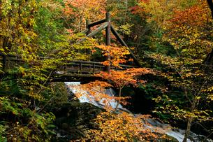 10月 せせらぎ街道の紅葉 森林公園から大倉滝への写真素材 [FYI01780848]