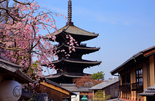 3月 枝垂桜の八坂の塔-京都東山の風景-の写真素材 [FYI01780873]