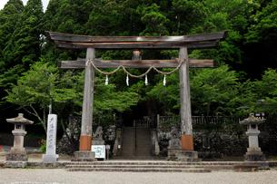 8月 戸隠神社中社の鳥居の写真素材 [FYI01780877]