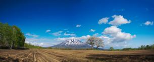 羊蹄山とさくらんぼの木の写真素材 [FYI01780883]