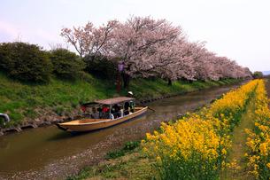 4月 春の近江八幡水郷めぐりの写真素材 [FYI01780895]