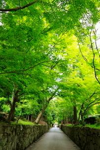 5月 新緑の興聖(こうしょう)寺  宇治の禅寺の写真素材 [FYI01780913]