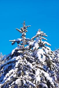 冬の木々の写真素材 [FYI01780914]