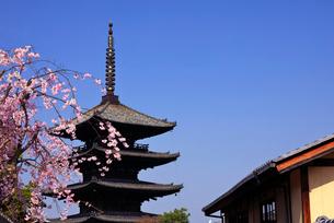 3月 枝垂桜の八坂の塔-京都東山の風景-の写真素材 [FYI01780949]