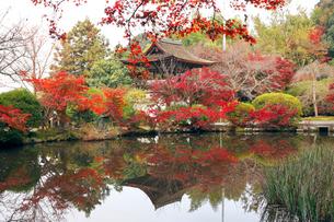11月 紅葉の長岳寺 大和の紅葉の写真素材 [FYI01780971]