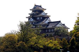 4月 春の岡山城の写真素材 [FYI01780986]