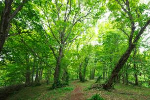 復興の森のブナ林の写真素材 [FYI01780998]
