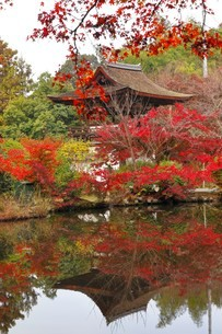 11月 紅葉の長岳寺 大和の紅葉の写真素材 [FYI01781009]