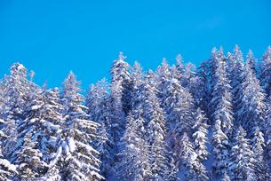 冬の木々の写真素材 [FYI01781069]