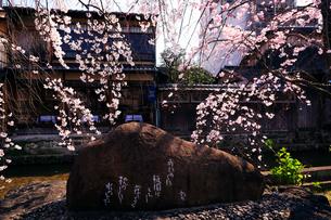 3月 サクラ咲く祇園白川の吉井勇碑の写真素材 [FYI01781164]