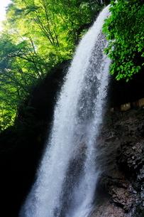 7月  雷滝 マイナスイオンの裏見の滝の写真素材 [FYI01781177]