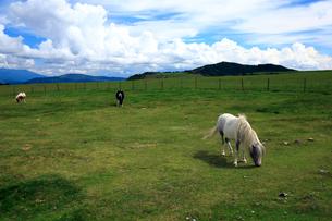 7月 夏の美ヶ原高原の写真素材 [FYI01781180]