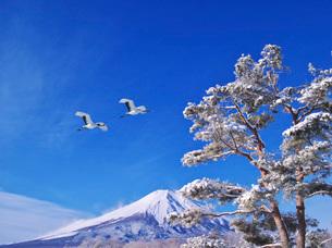 富士山と赤松の写真素材 [FYI01781232]