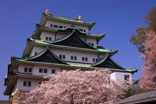 3月 桜の名古屋城の写真素材 [FYI01781242]