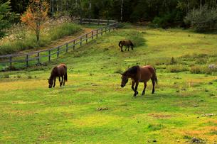 9月 秋の木曽馬の里の写真素材 [FYI01781254]