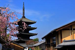 3月 枝垂桜の八坂の塔 京都東山の風景の写真素材 [FYI01781314]