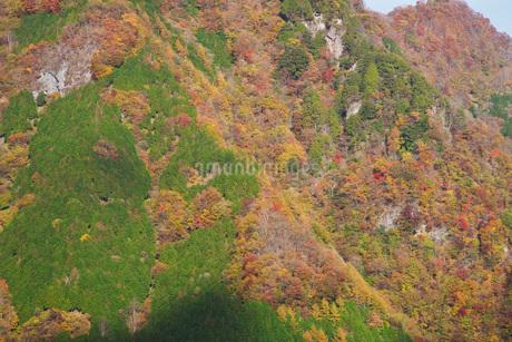 三峰山の秋の写真素材 [FYI01781358]