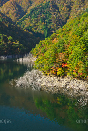 徳山湖の秋の写真素材 [FYI01781362]