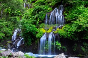 8月 夏の吐竜の滝の写真素材 [FYI01781479]