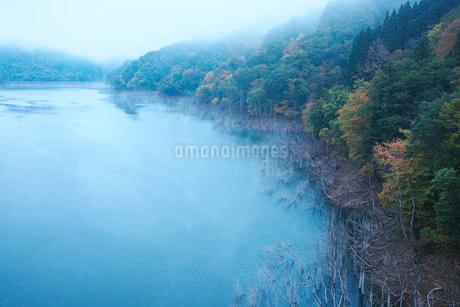 徳山湖の朝の写真素材 [FYI01781518]