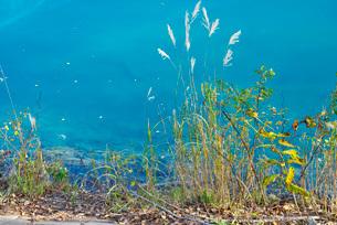 青い池の秋の写真素材 [FYI01781552]