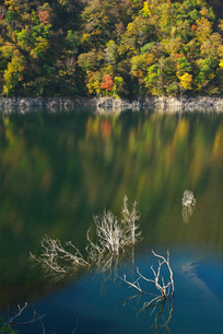 徳山湖の秋の写真素材 [FYI01781566]