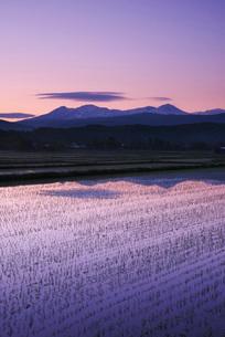 大雪山と朝の水田の写真素材 [FYI01781578]