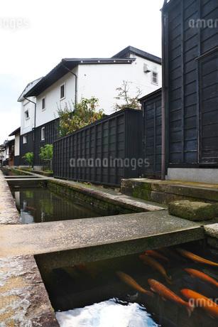 瀬戸川と白壁土蔵街の写真素材 [FYI01781625]