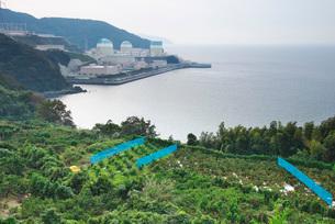 伊方原子力発電所とミカン畑の写真素材 [FYI01781662]